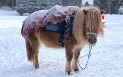 Зимна разходка на пони